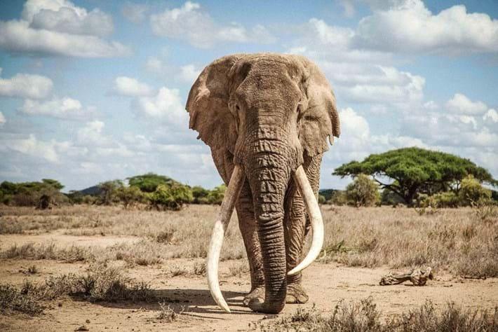 Tim-elephant-Ryan-Wilkie_2020-02-06.jpg