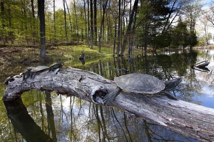 turtles_on-log_2020-02-12.jpg