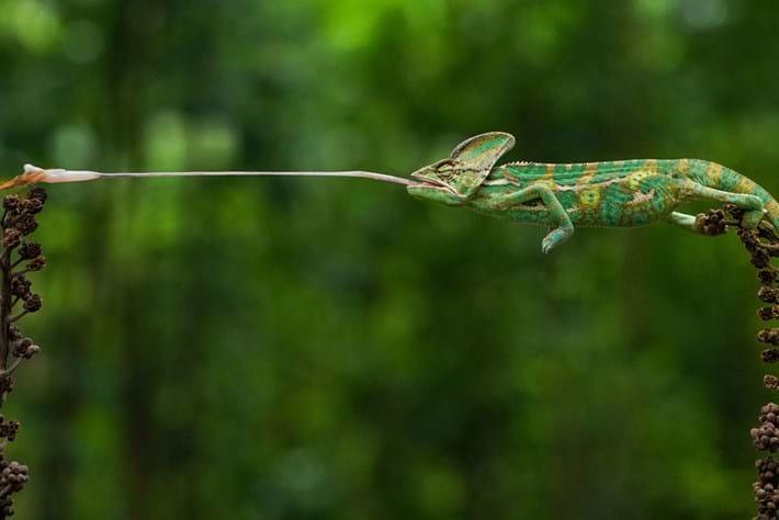 chameleon-page-2020-03-02.jpg