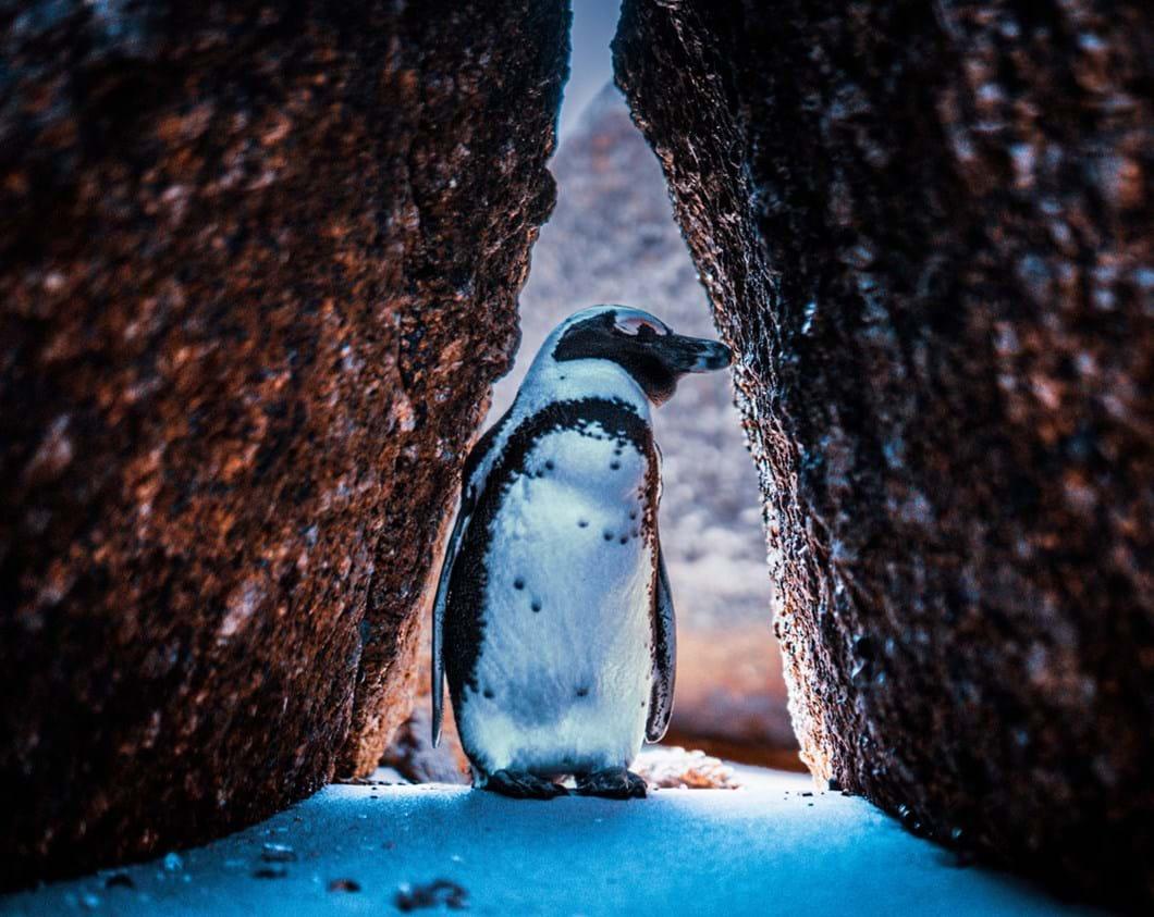 Penguin-by-@curtjam_2020-03-02.jpg