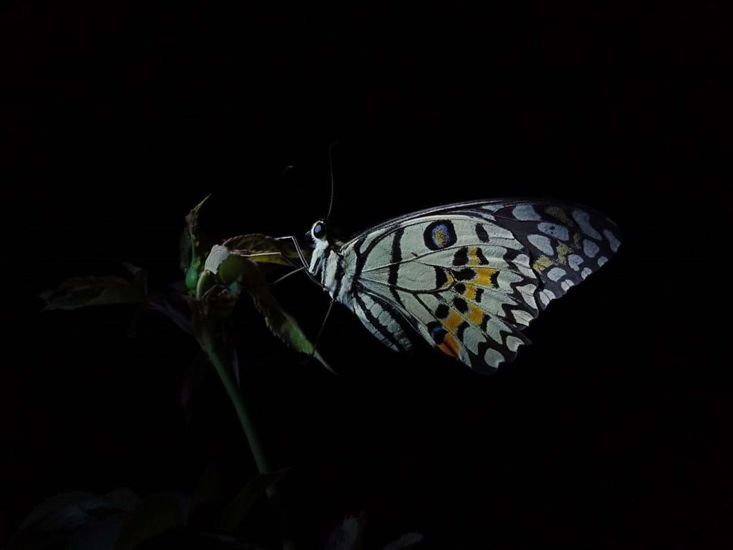 Night-of-butterfly-by-@achmaddehapegrafi_2020-03-02.jpg