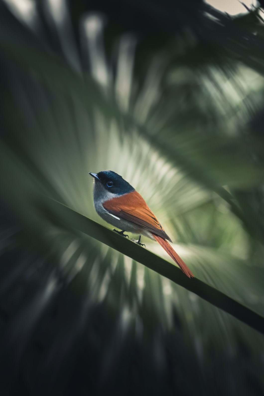Natural-inhabitant-by-@seplb_2020-03-02.jpg