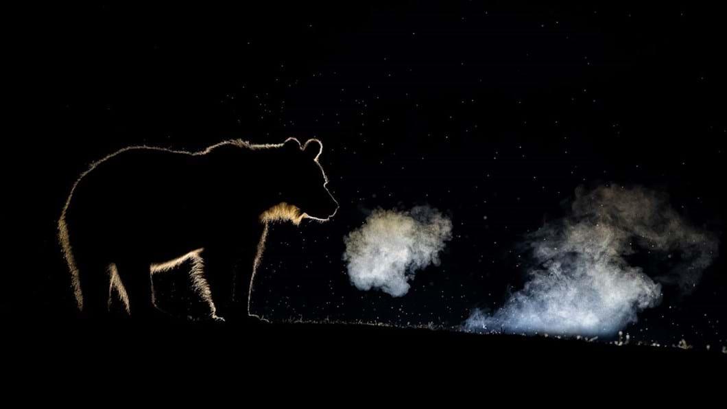 Bence-Mate-brown-bear_2020-03-31.jpg