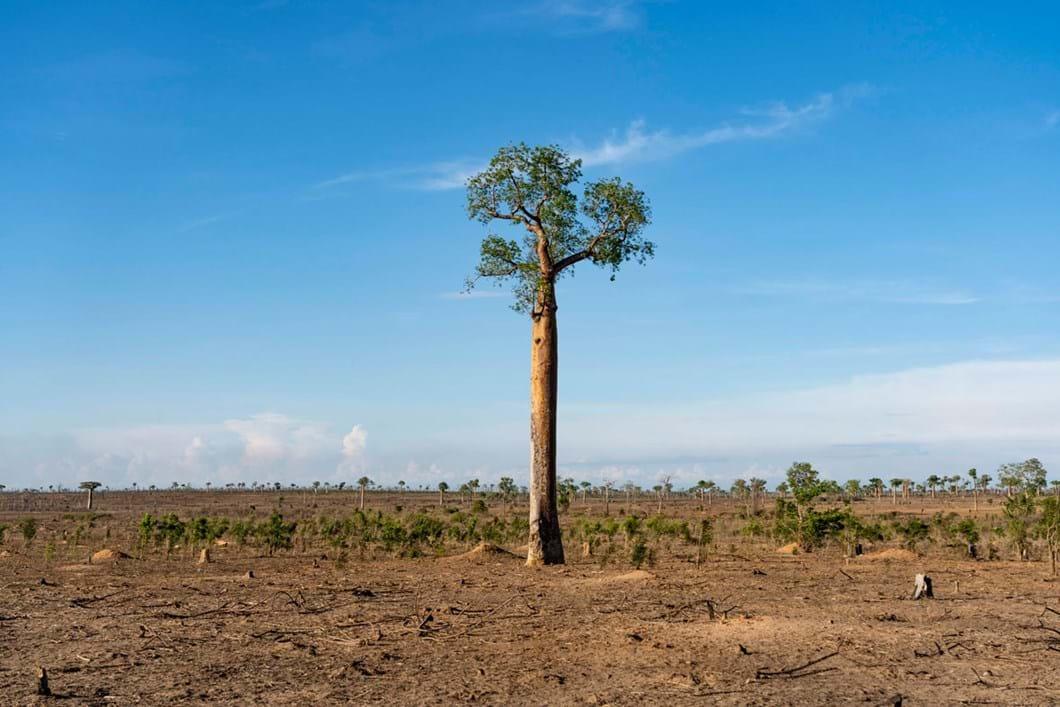 slashed-and-burned-forest-madagascar_2020-04-02.jpg