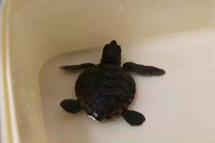 sea-turtle-ice-cream-tub_page_2020-04-06.jpg