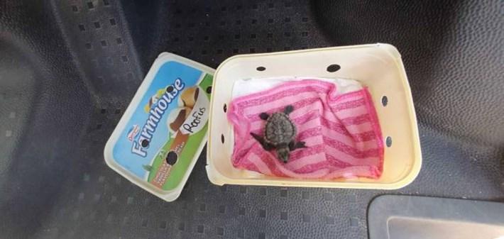 sea-turtle-ice-cream-tub_2020-04-06.jpg.jpg