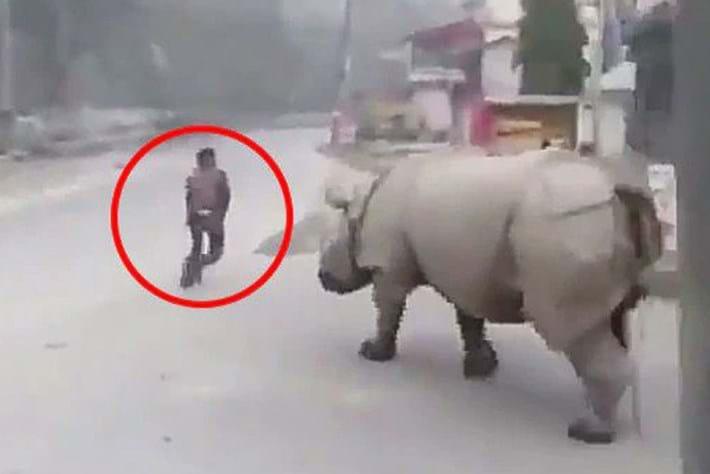 Watch: Rhino patrolling a street in Nepal helps enforce national lockdown