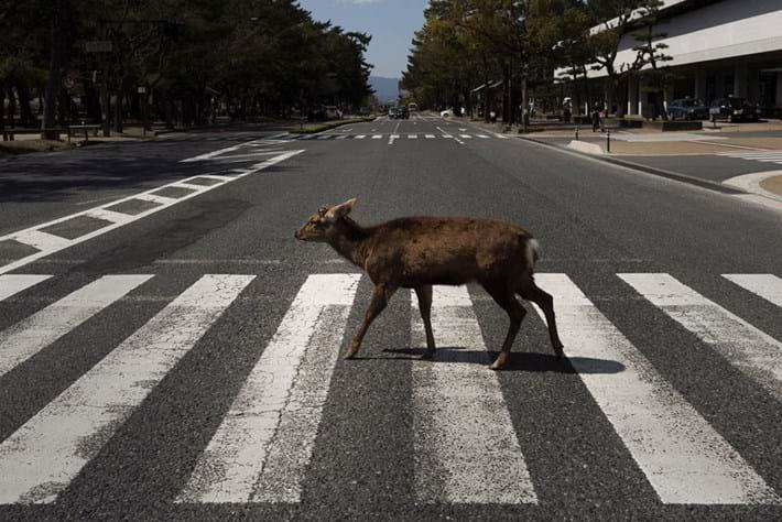 antelope-cossing-road_page_2020-04-09.jpg