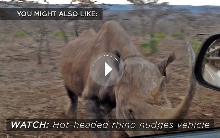rhino-charge-related-content_2020-04-13.jpg