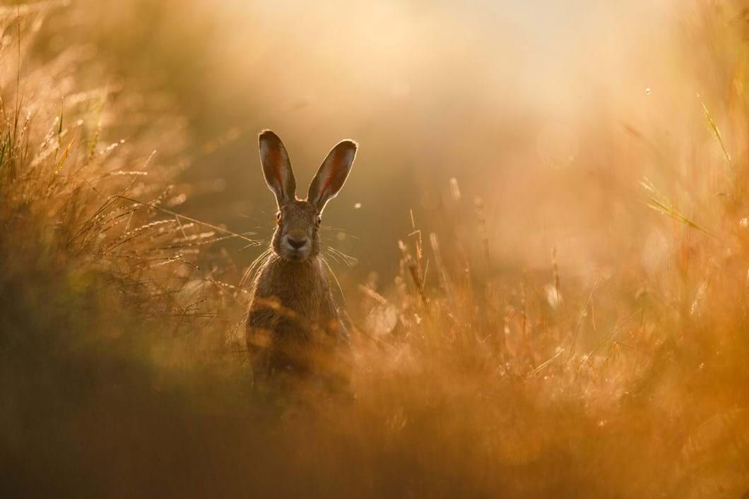 peter-lindel-hares_2020-04-30.jpg