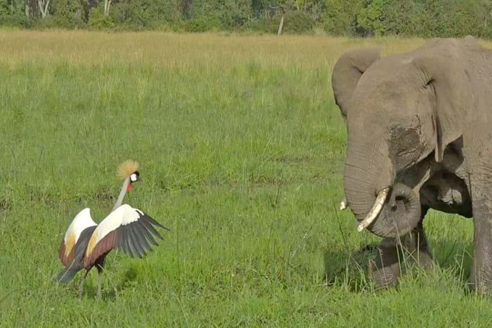 Crane-elephants_2020-05-14.jpg