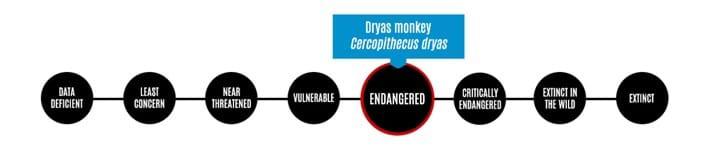 DRYAS-MONKEY-IUCN_2020-05-15.jpg