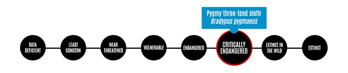 PYGMY-THREE-TOED-SLOTH-IUCN_2020-05-15.jpg