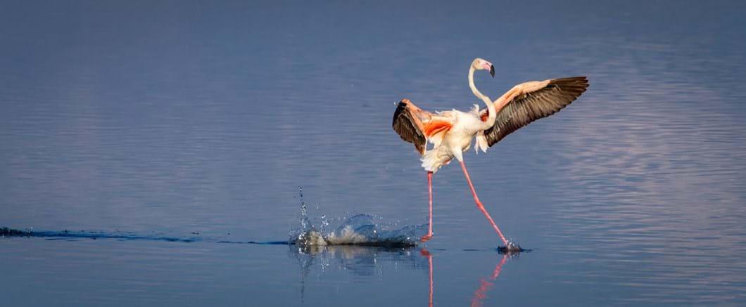Tommy-Mees-flamingo_2020-05-26.jpg