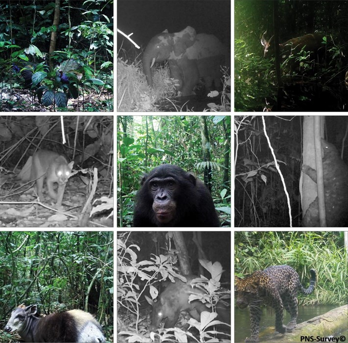 collage-rainforest-camera-trap_2020-06-01.jpg