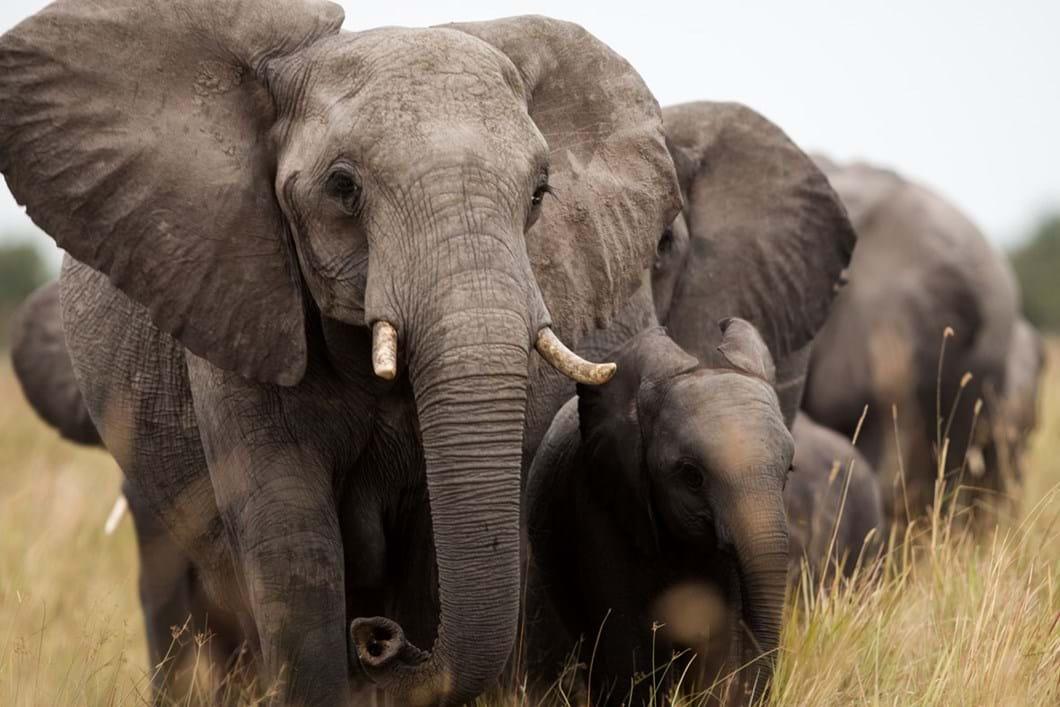 elephants_2020-06-05.jpg