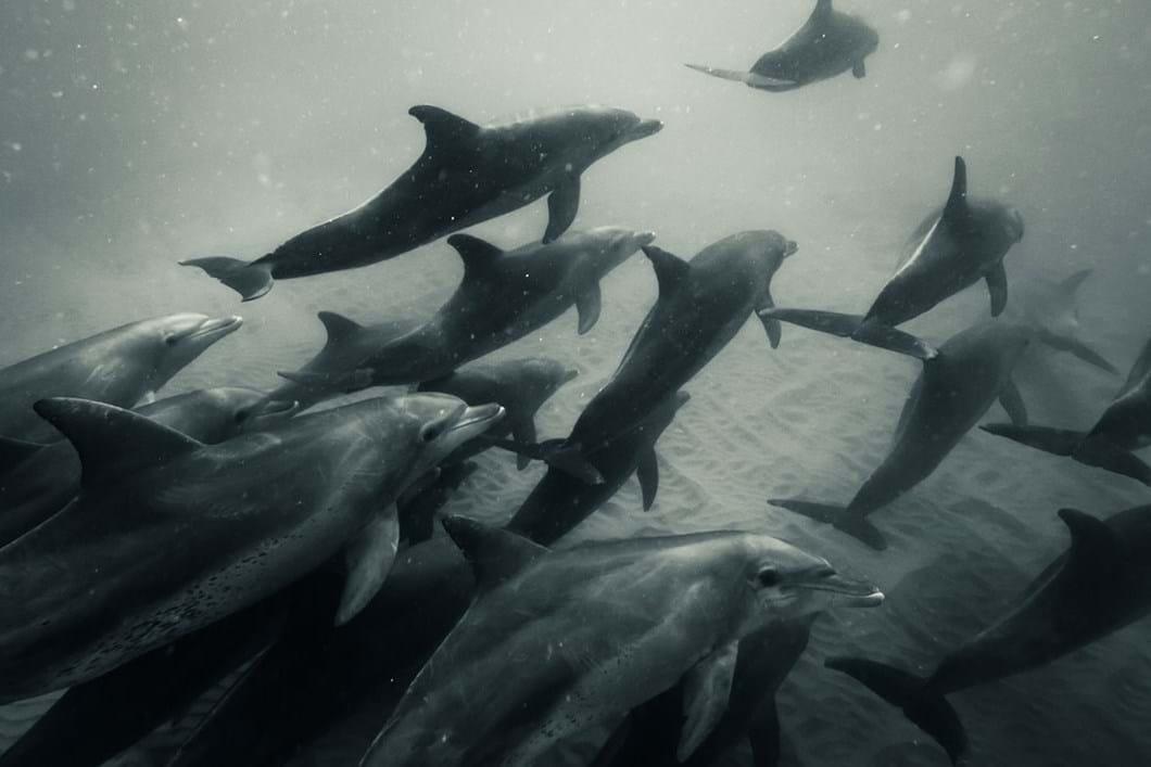 dolphins_2020-06-05.jpg