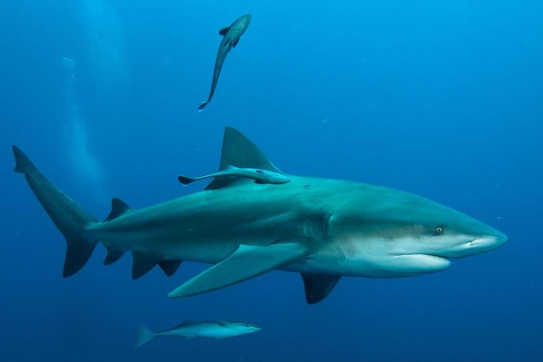 shark_2020-06-05.jpg