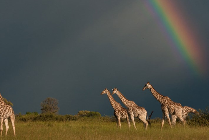 Time for Nature: We're sharing our best nature photos from the field for World Environment Day