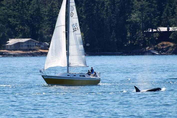 sailing-boat-orcas_2020-06-12.jpg