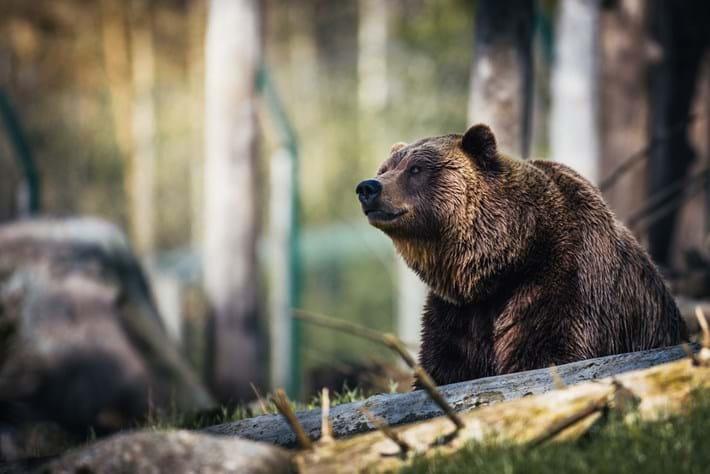 grizzly-bear_2020-06-22.jpg