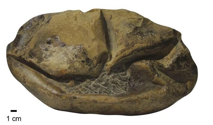 soft-shelled-dinosaur-egg_2020-06-23.jpg