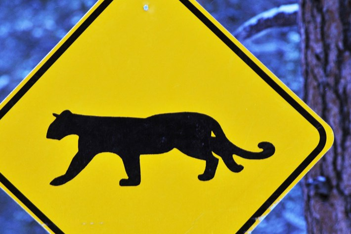 mountain-lion-crossing-sign_page_2020-06-30.jpg