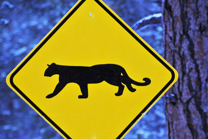 mountain-lion-crossing-sign_2020-06-30.jpg