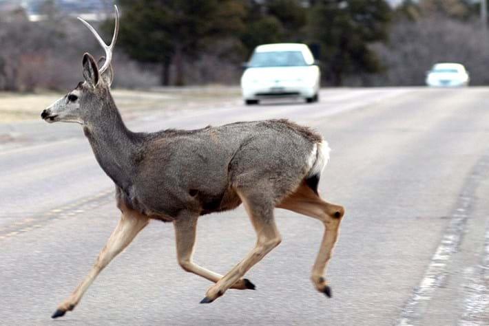 deer-road_2020-06-30.jpg