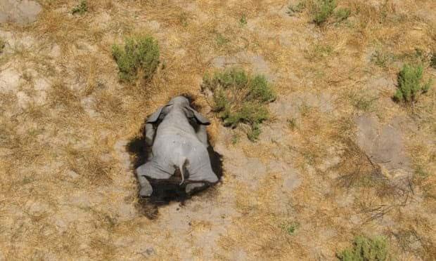 elephants-botswana_3_2020-07-02.jpg