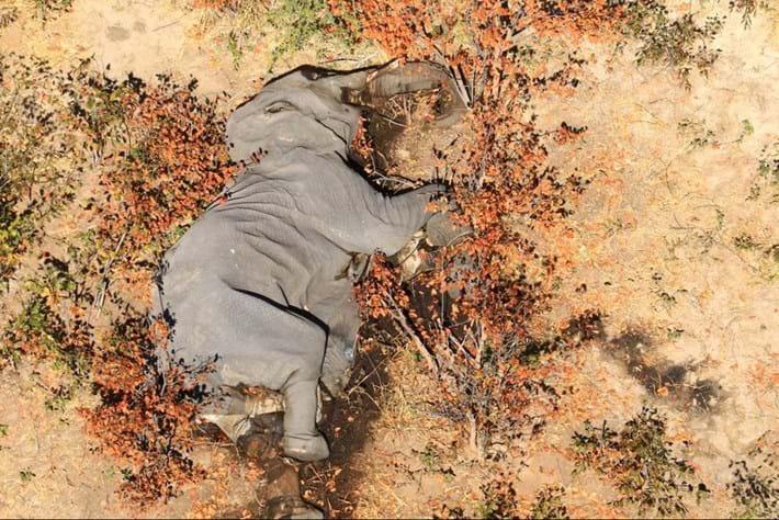 elephants-botswana_1_2020-07-02.jpg