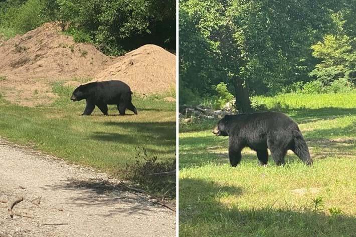 bruno-the-bear_2020-07-10.jpg