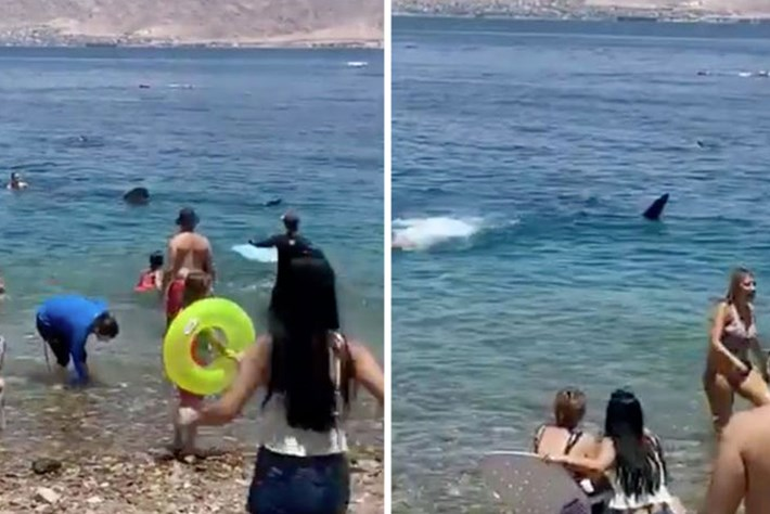 Watch: Harmless whale shark scares Israeli beachgoers