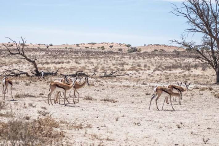 Africa's Predator Kingdoms – Episode 5 – Kalahari