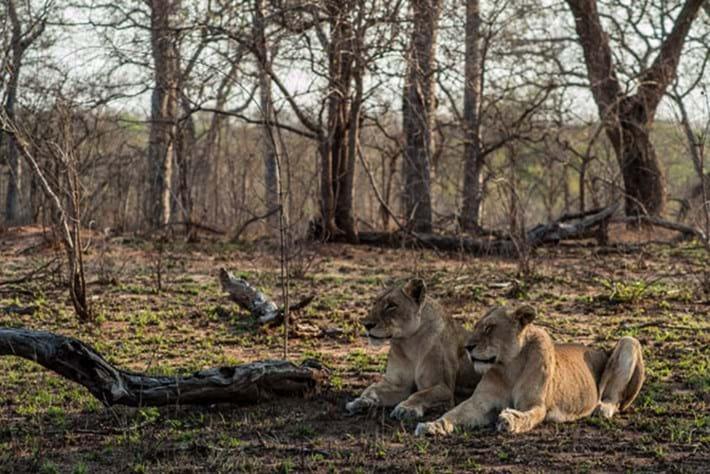 Africa's Predator Kingdoms – Episode 6 – Bushveld