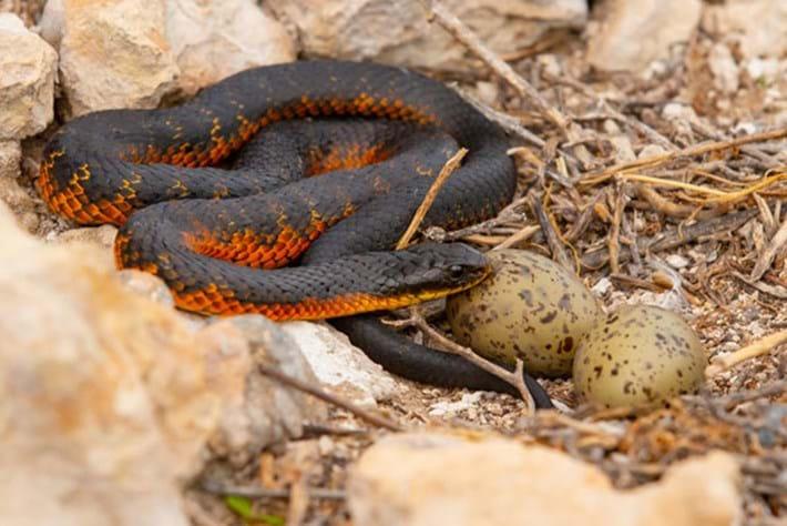 Killer Snake Island