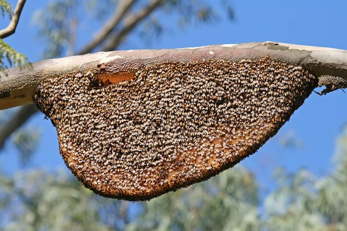 honey-bees-on-branch_2020-08-13.jpg