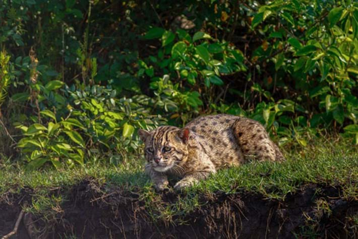 On The Brink – Season 1 – Fishing Cat
