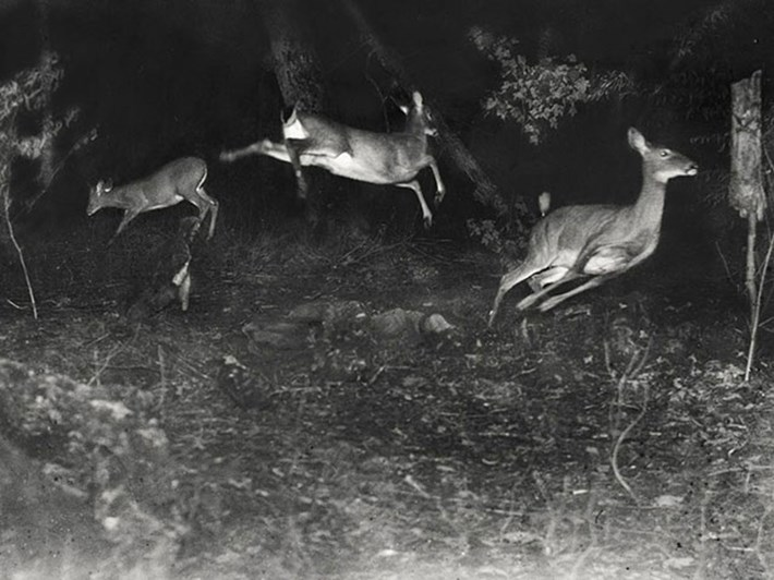 deer-jumping-vintage-wildlife_2020-08-19.jpg