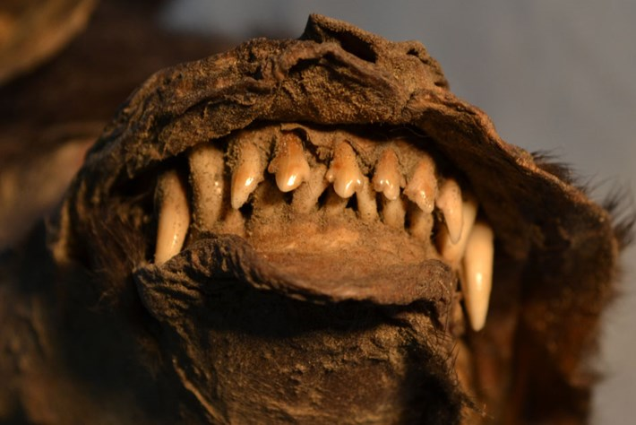 There's much to learn from poking around in prehistoric bellies