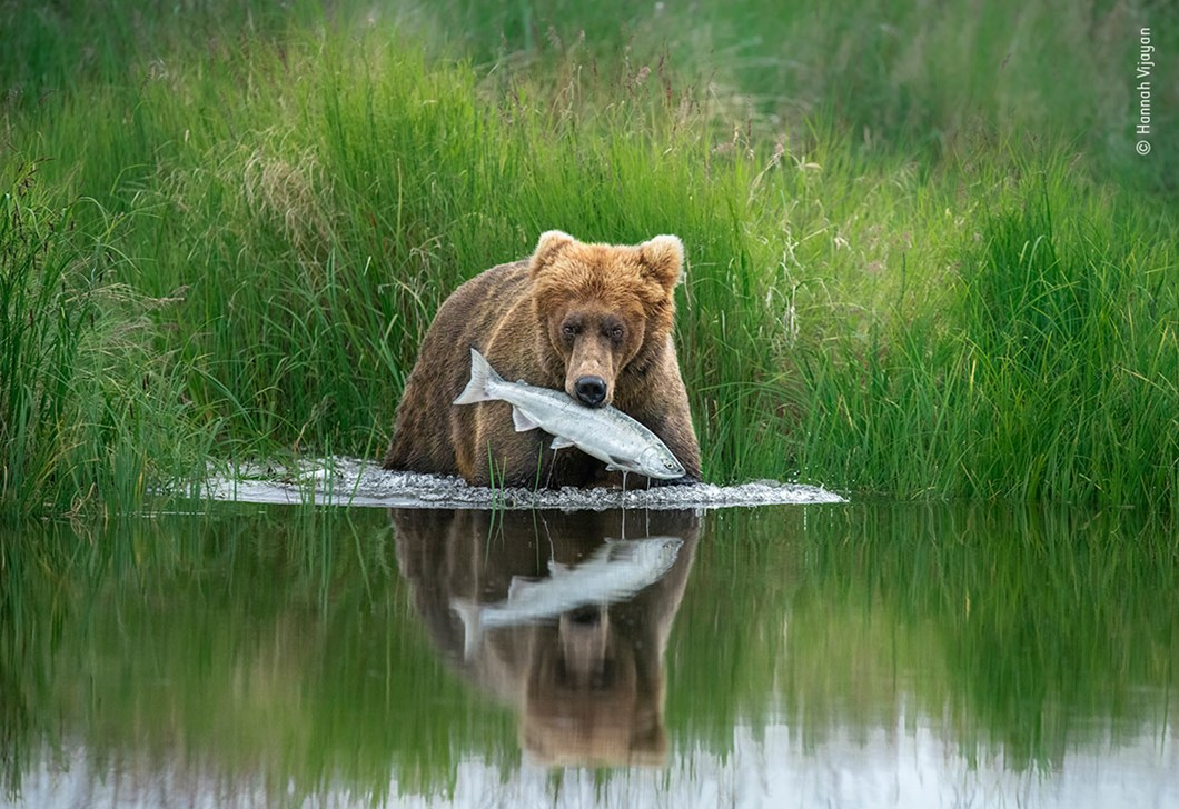 Hannah-Vijayan-Wildlife-Photographer-of-the-Year-bear-fish_2020-09-02.jpg