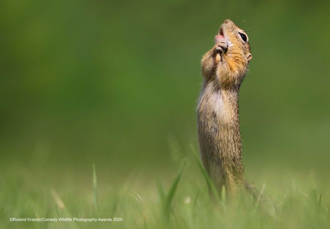 Roland-Kranitz_dramatic-squirrel-funny_2020-09-17.jpg