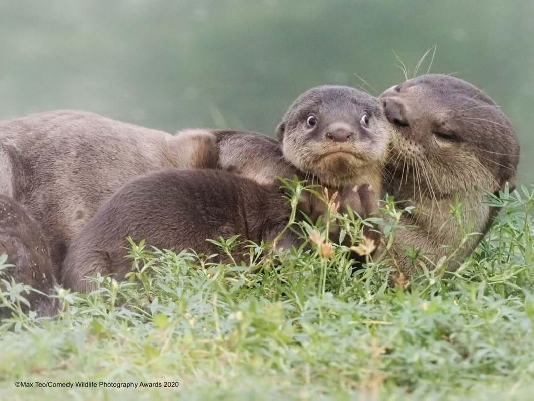 Max-Teo_otter-kiss-funny_2020-09-17.jpg