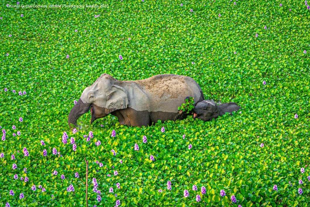 Kunal-Gupta_elephants-green-field_2020-09-17.jpg