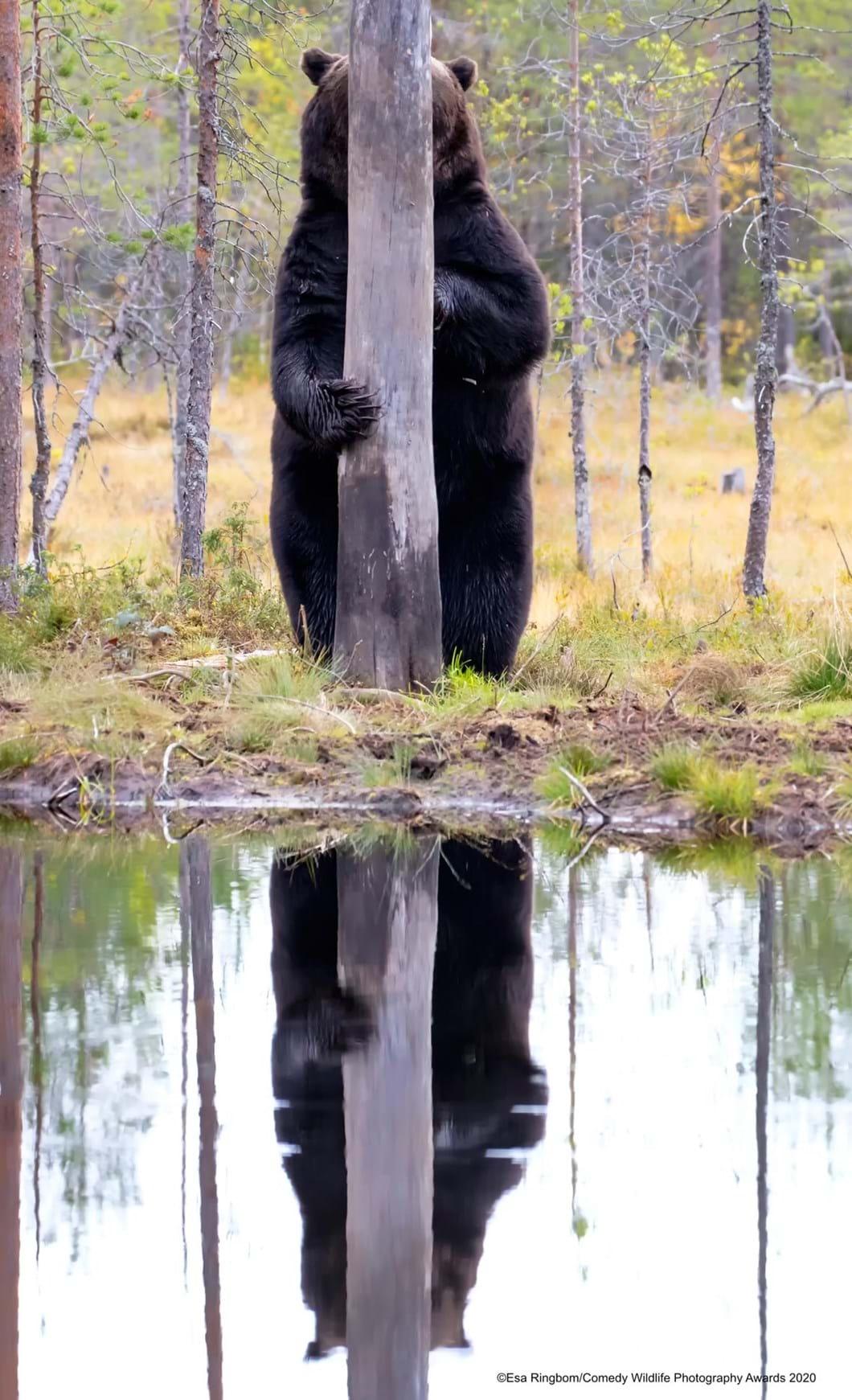 Esa-Ringbom_bear-hiding_2020-09-17.jpg
