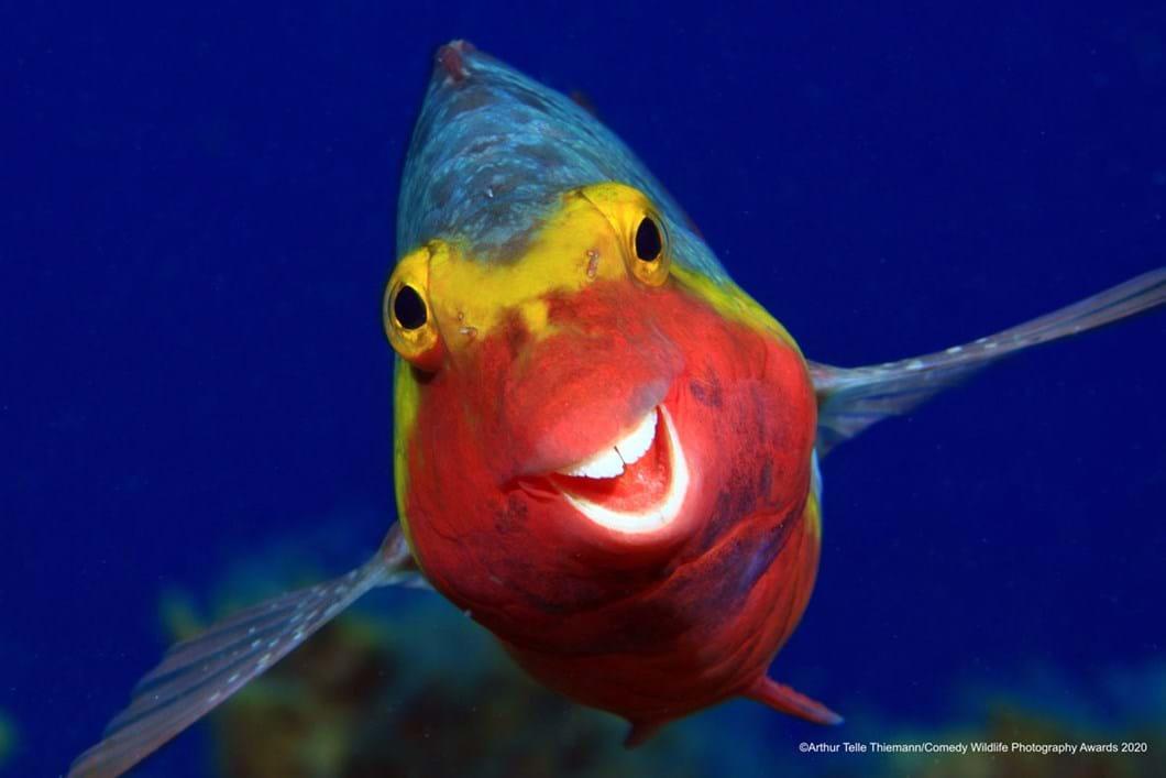 Arthur-Telle-Thiemann_smiling-fish_2020-09-17.jpg