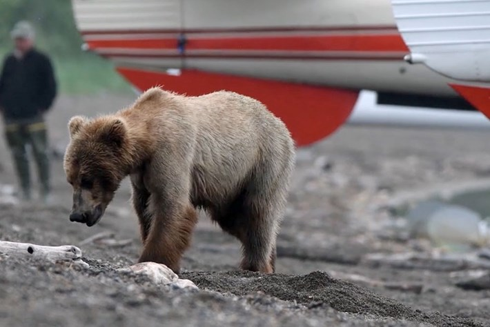 Behind the Scenes: Filming the bears of Alaska's Brooks River
