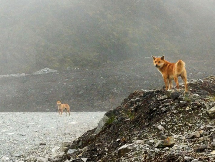 singing-dogs_2020-09-19.jpg