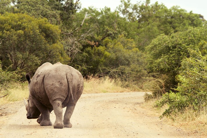 white-rhino-tania-kuhl_2020-09-22.jpg