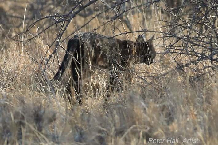 black-african-wild-cat_2_2020-11-04.jpg